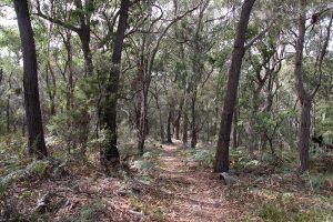Mixed forest, Light to Light Walk