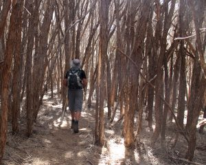Cool ti tree, Light to Light Walk