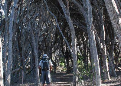 Through the ti tree