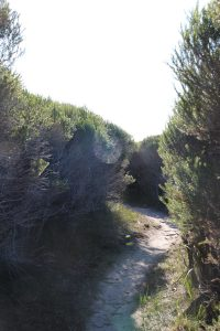 Ti tree avenue, Light to Light Walk