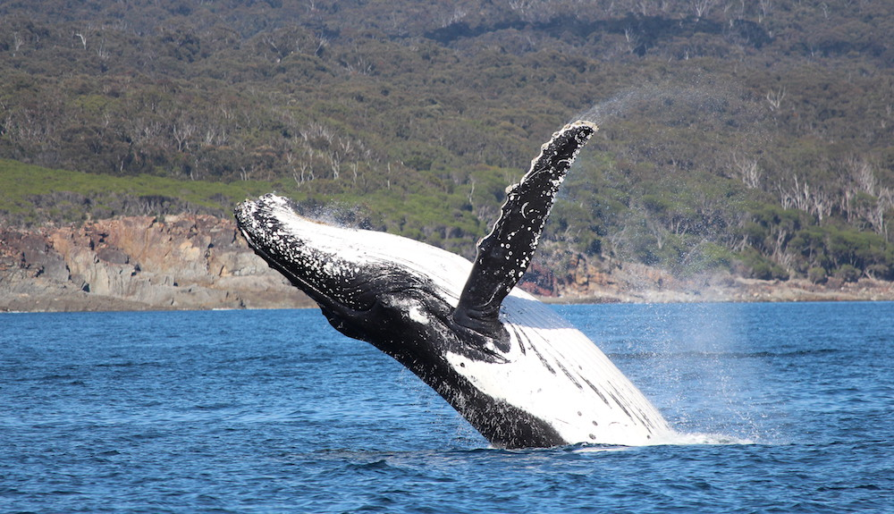 Wild About Whales? We Can Take You There.