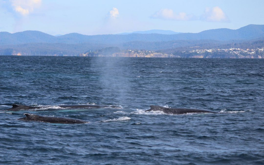 The whales are early – get on the track to see them!