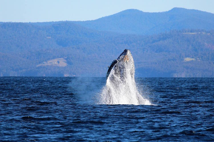 Up Close and Personal with Whales Along the Wilderness Coast