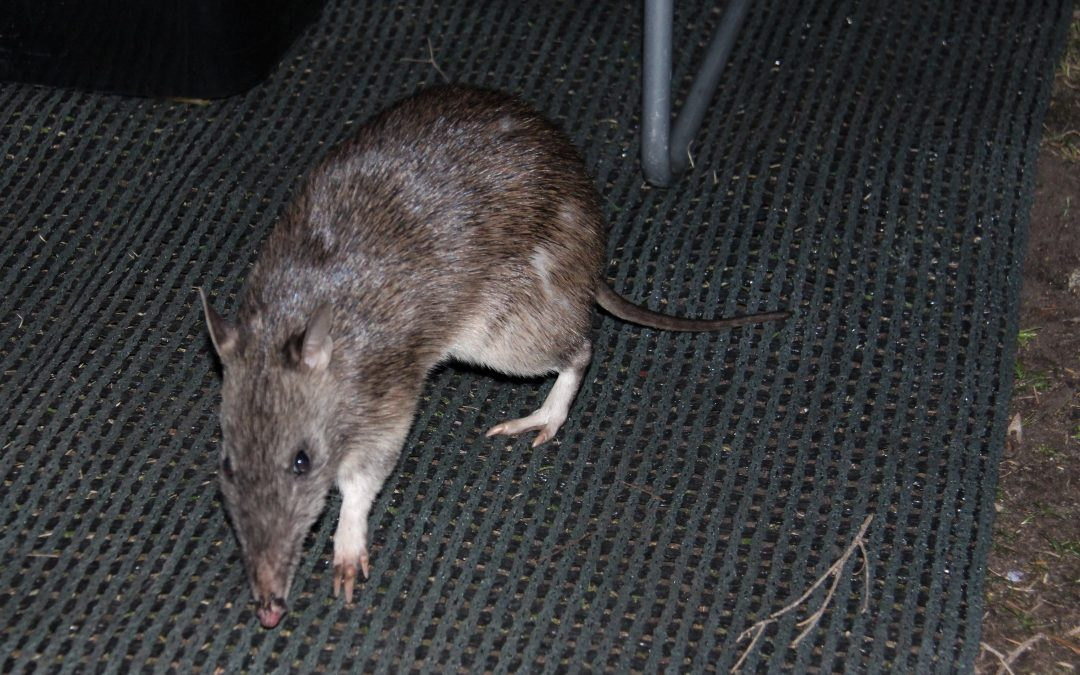 Critters of the night – why a camping experience beats a hotel hands down