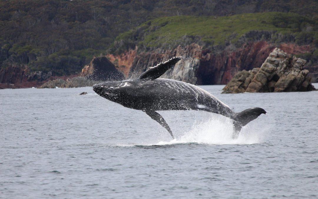 Whale Walk Weekend