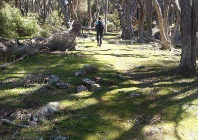 Ti tree forest, Light to Light Walk