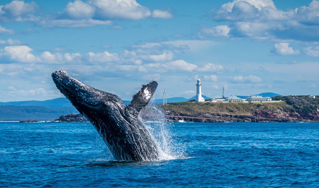 We've got a great deal on our Whale Walk