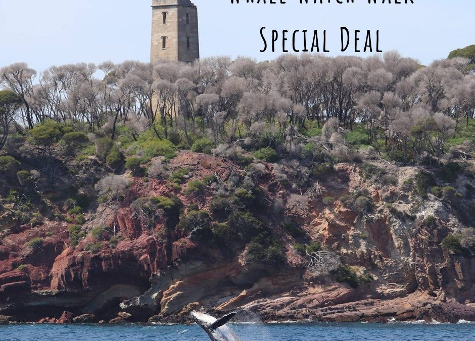 Super Special Deal – Whale Watch Walk Tour