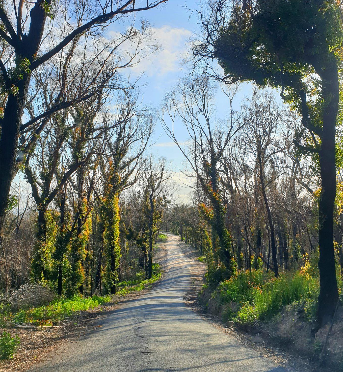 Green Cape road